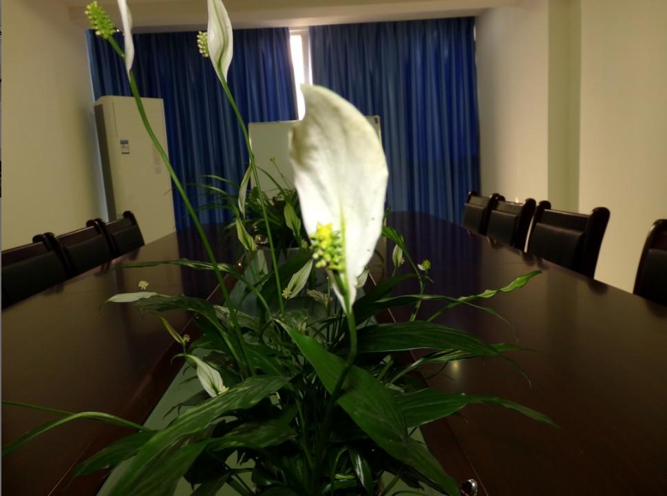 会议室一帆风顺